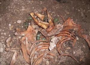 Restos de un esueleto sin cabeza encontrados bajo las pinturas representativas de un combate