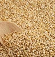 Grano de la Quinoa, foto Manuel Méndez